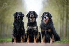 Isabel van Veen Fotografie-Shoots-Hondenshoot-hondenfotografie-hond-hovawart (2)