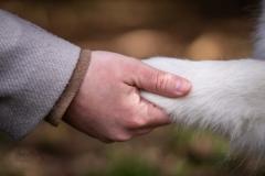 Isabel van Veen Fotografie-Shoots-Hondenshoot-hondenfotografie-hond-poot-hand-liefde-familieshoot (21)