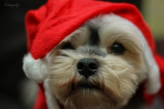 IsabelvanVeen-Portfolio-Huisdier-hond-boomer (3)