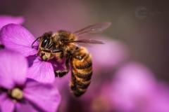 Isabel van Veen Fotografie-Portfolio-Natuurfotografie-natuur-bij-insect-macro (13)