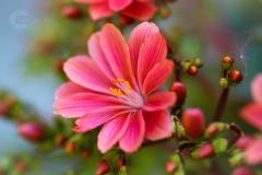 Isabel van Veen Fotografie-Portfolio-Natuurfotografie-natuur-bloem-tuin (7)
