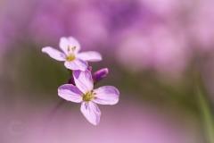 Isabel van Veen Fotografie-Portfolio-Natuurfotografie-natuur-bloemen-(1)