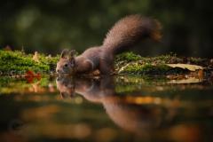 Isabel van Veen Fotografie-Portfolio-Natuurfotografie-natuur-eekhoorn-reflectie (9)