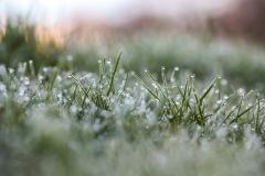 Isabel van Veen Fotografie-Portfolio-Natuurfotografie-natuur-gras-vorst (23)