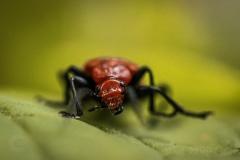Isabel van Veen Fotografie-Portfolio-Natuurfotografie-natuur-insect (15)