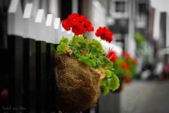 IsabelvanVeen-Portfolio-Overig-hek-bloemen (17)