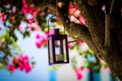IsabelvanVeen-Portfolio-Overig-lantaarn-boom-bloemen (12)